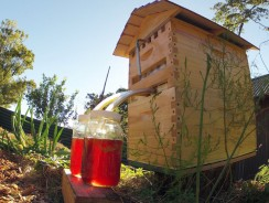 Flow Hive – Gathering honey as easy as flipping a switch?